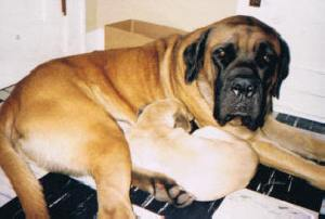 9 Rufus and Billie 2003