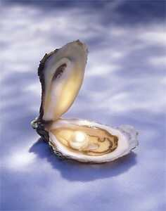 Pourquoi les hu tres produisent elles des perles tom11590 for Interieur huitre