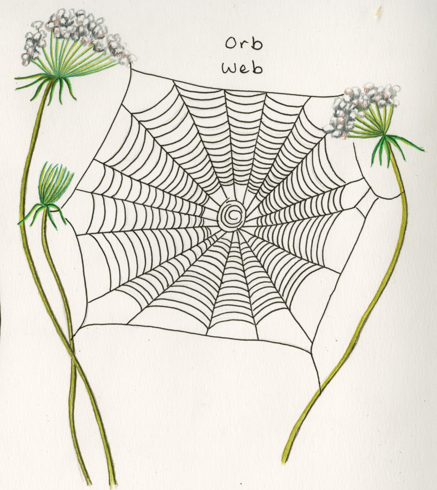 Bay Nature Magazine How To Recognize Spiders By Their Webs