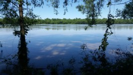 Potential new site on the Atchafalaya River