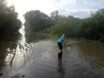 Pulling samples off of a flooded levee access road - Mississippi River