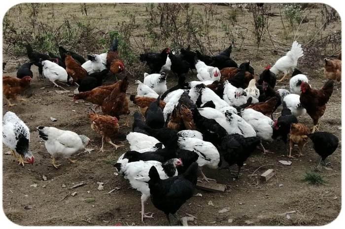 Сорняки для птиц