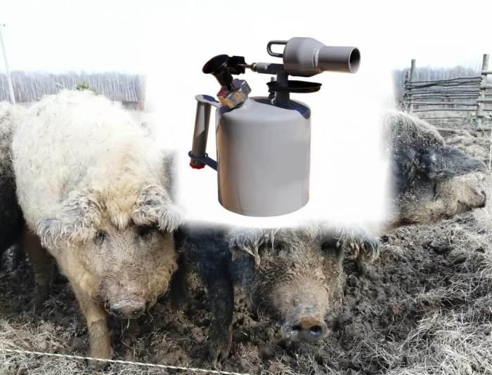 Опаливать (палить, смалить) свиней