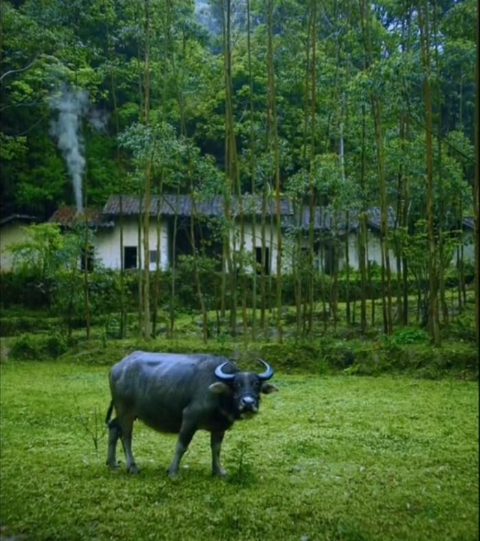 Дрожжи для молочных коров, телят и бычков