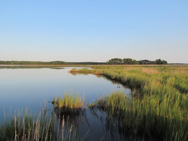 Kayak scenery on Marshy Creek