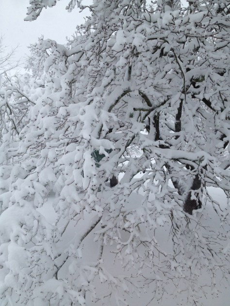 photo of tree covered in snow
