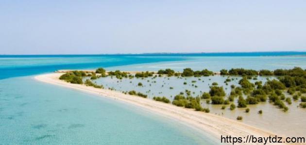 أين تقع جزيرة فرسان