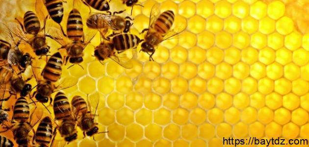 بحث عن النحل وفوائده