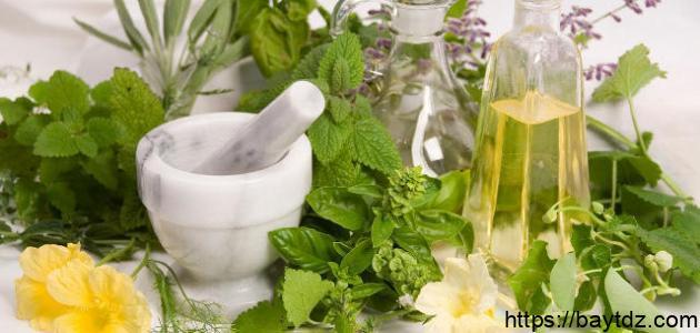 خصائص النباتات الطبيعية وفوائدها للإنسان