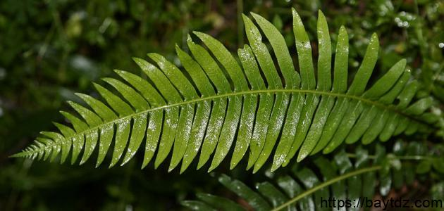 خصائص النباتات
