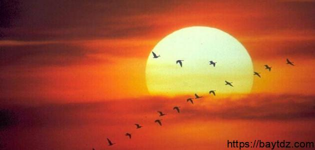 كلام عن الشمس