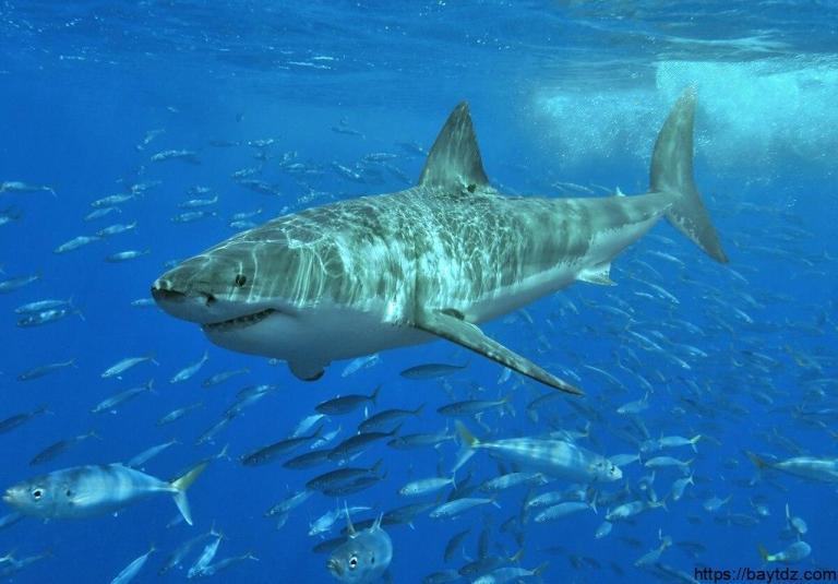 الفرق بين الأسماك العظمية والغضروفية