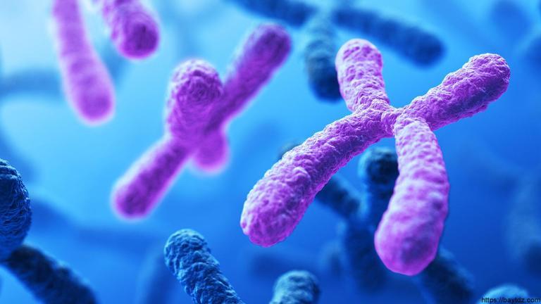 ماهي الوراثة المعقدة والوراثة البشرية