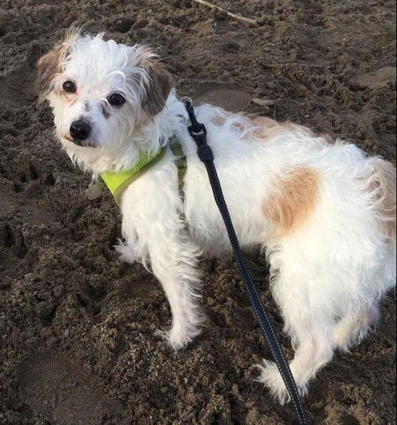 mary rescue dog