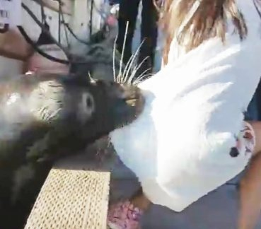 Girl dragged off wharf by sea lion a scary moment in nature