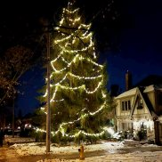 Tallest Christmas tree in Leaside is on Bessborough