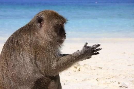 monkey_beach_4