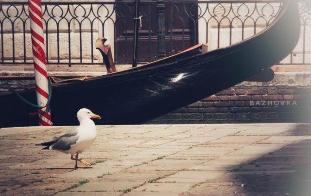 1 25 e1568491411775 - Почему ты не хочешь в Венецию?