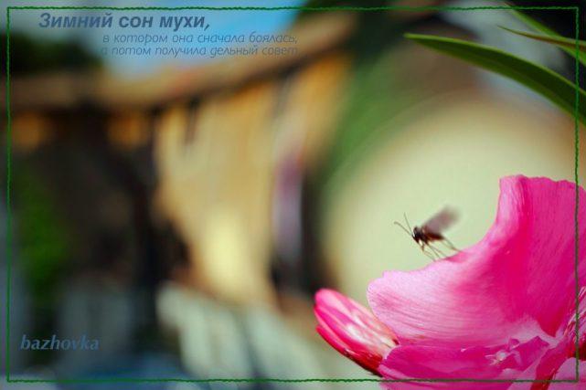 2 6 e1522565331397 - Зимний сон мухи,  в котором она встретилась со старинной подругой и получила от неё совет