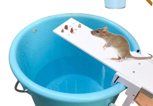 piege à souris