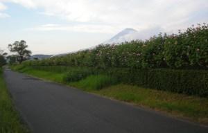 富士川緑地公園1