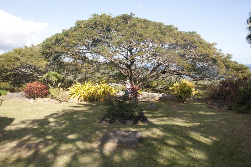 Carol under a tree at Fort George.