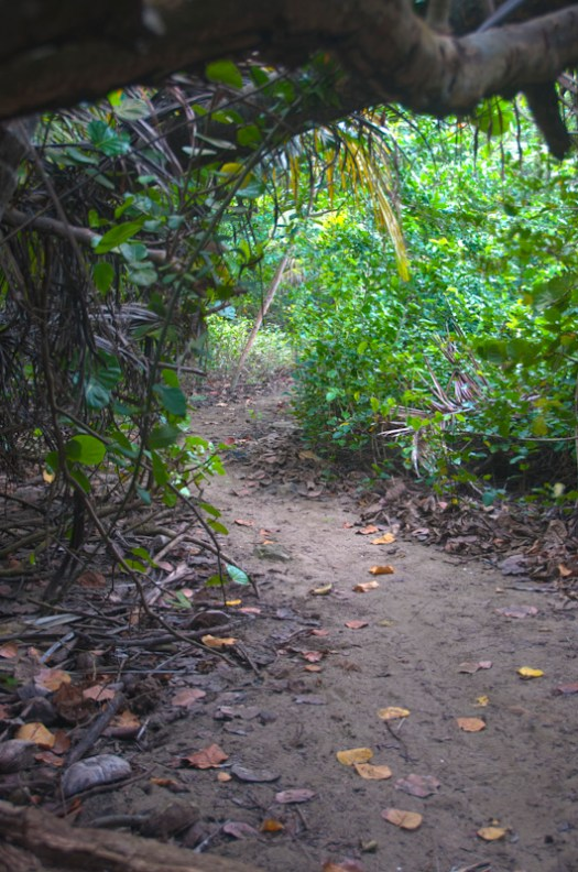 The path from the villa to the beach.