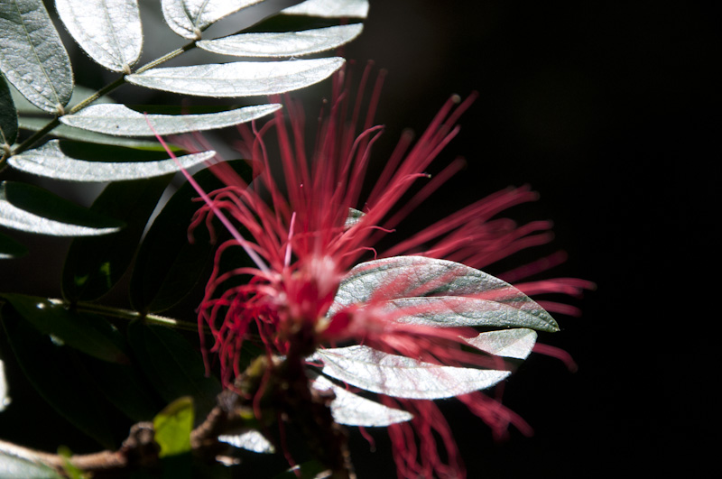A beautiful flower on Little Tobago.