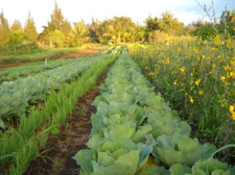 Diversified Agriculture