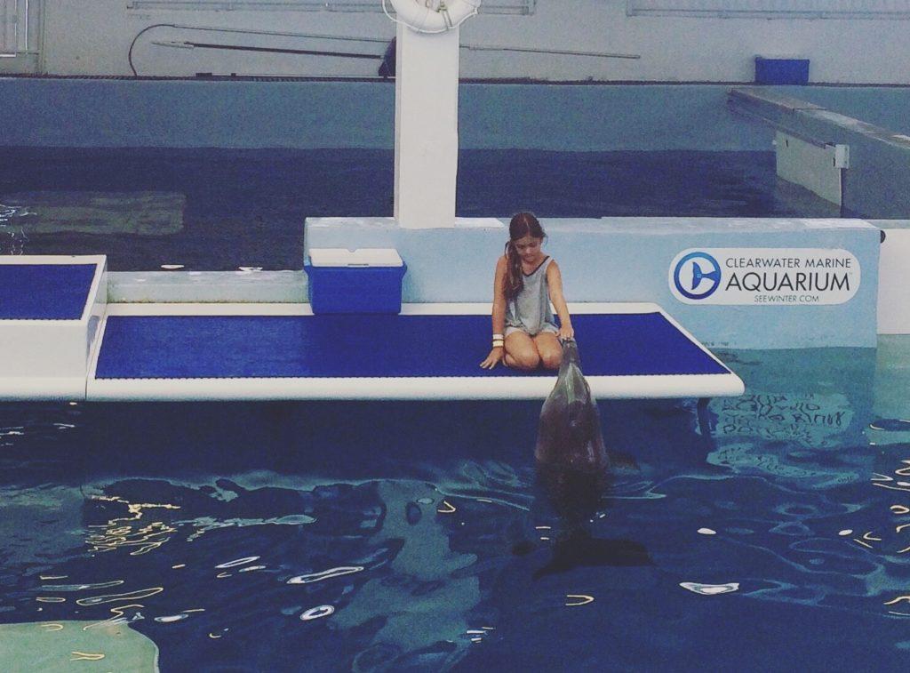 clearwater_marine_aquarium