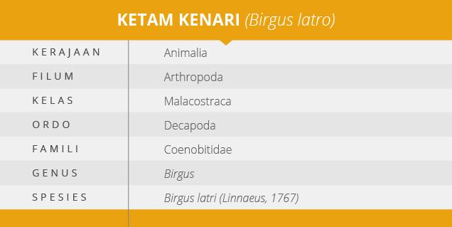 Fauna-Ketam-Kenari-Arthropoda-Terbesar-di-Dunia-yang-Mulai-Terancam_03
