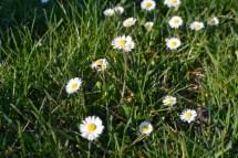 16mars17_printemps