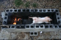 Whole pig cooking in Texas Barbecue - Texas Barbecue