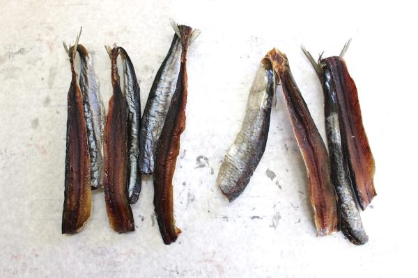 Saury on the L, herring on the R