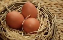 egg-1237755_960_720
