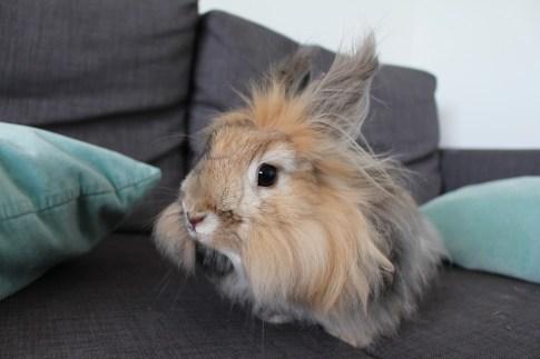 rabbit-1296926_960_720