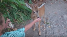 Woman pets Downtown Deer