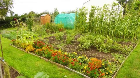 houses approved on allotment