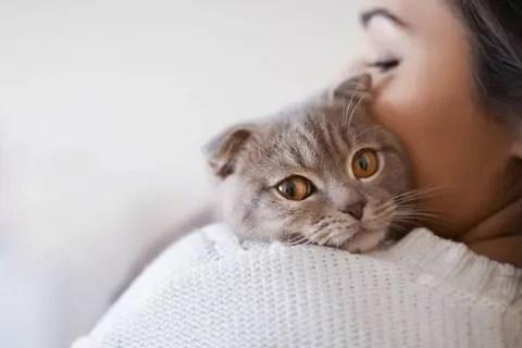 Los gatos y su necesidad de amor