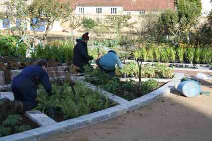 Colour garden planting