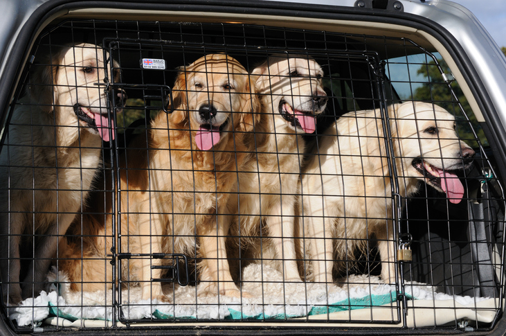 How to transport your pet safely – and without getting a ticket