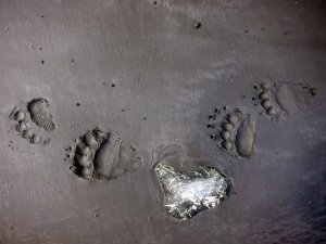 lack bear tracks bc firearms academy