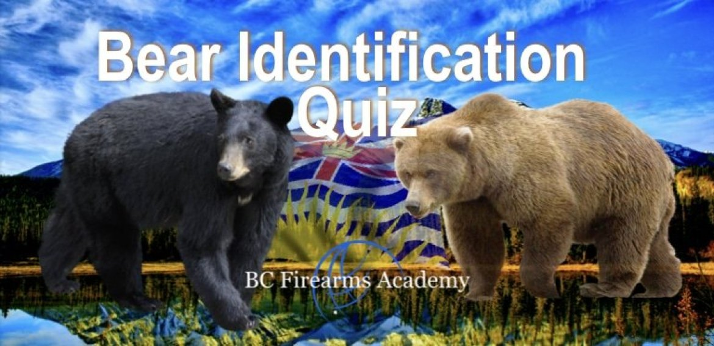 Bears of BC Identification Quiz