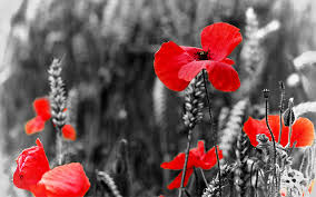 Remembrance Day Lest We Forget 2018