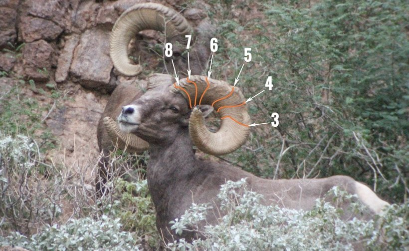 BC Animal Identification CORE Annuli