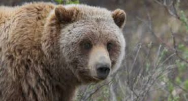 Predatory Wildlife & Bear Defence – Shotgun & Rifle Certification Dec 14