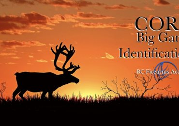 Big Game Species Identification