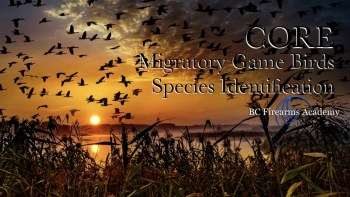Migratory Game Birds Species Identification
