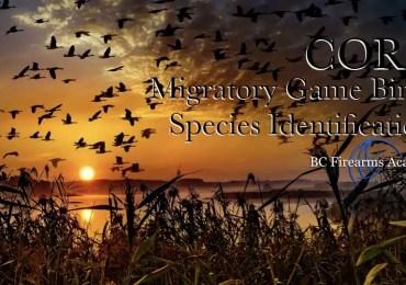 Migratory Game Birds Species Identification
