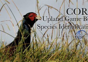 Upland Game Bird Species Identification